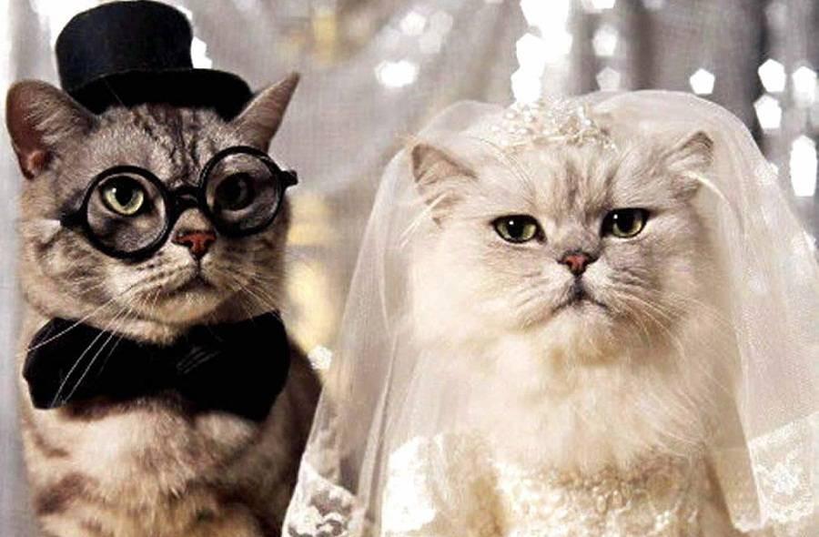 Фото с годовщиной свадьбы прикольные, картинка анимация днем